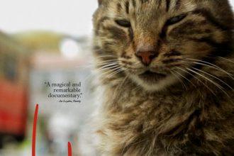 Kedi Belgeseli
